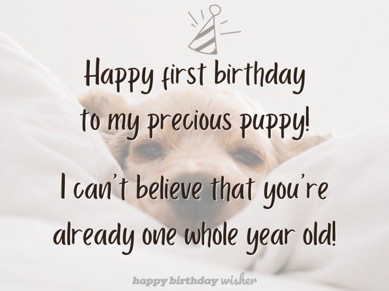 Happy first birthday to my precious puppy